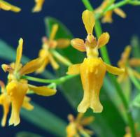 An Introduction to Orchids - Part 2