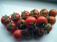 Sowing Early Cropping Home Grown Tomatoes